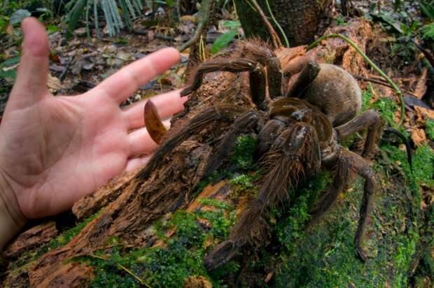15 невообразимо громадных животных, которые на самом деле существуют