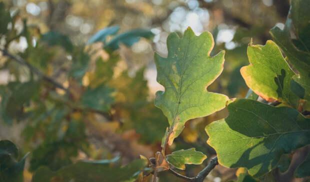 В Волго-Ахтубинской пойме за саженцами дубов будут ухаживать 10 лет