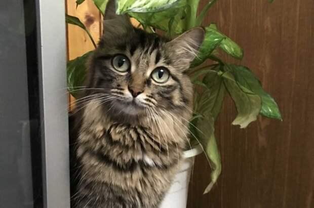 В РФ стартовали доклинические исследования вакцины от аллергии на кошек