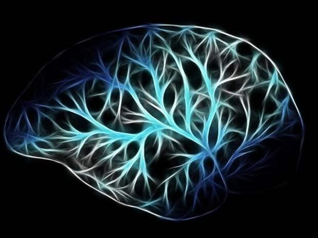 Ученый рассказал, как замедлить старение мозга