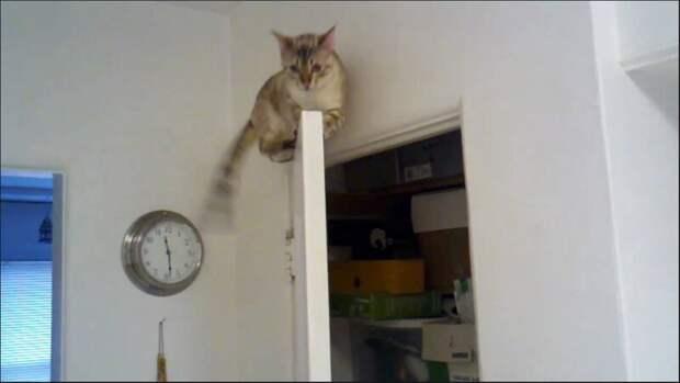 4. «А теперь ты прячься!» Любовь, животные, коты, кошки, люди, милота, питомцы