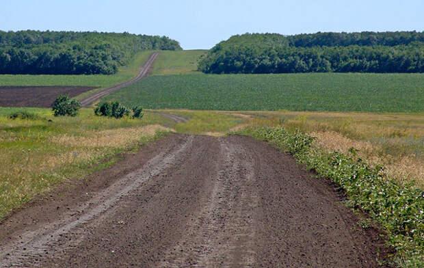 Защитные лесополосы юга России. экология, лесозащитная полоса, борьба с пустыней, длиннопост