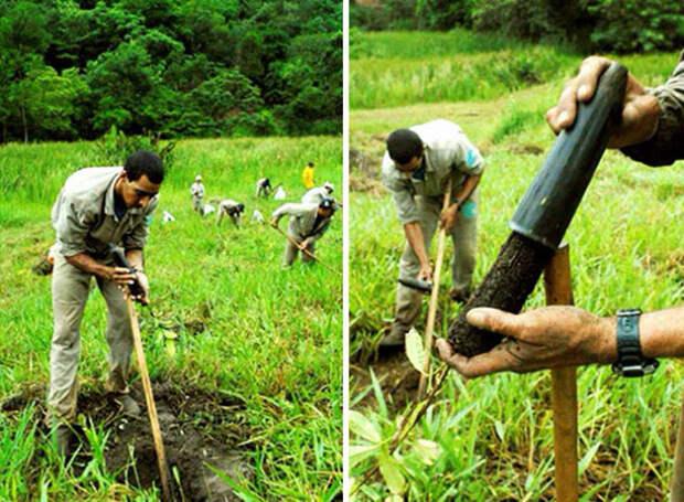 Фотограф и его жена за 20 лет высадили 2 миллиона деревьев и возродили уничтоженный лес