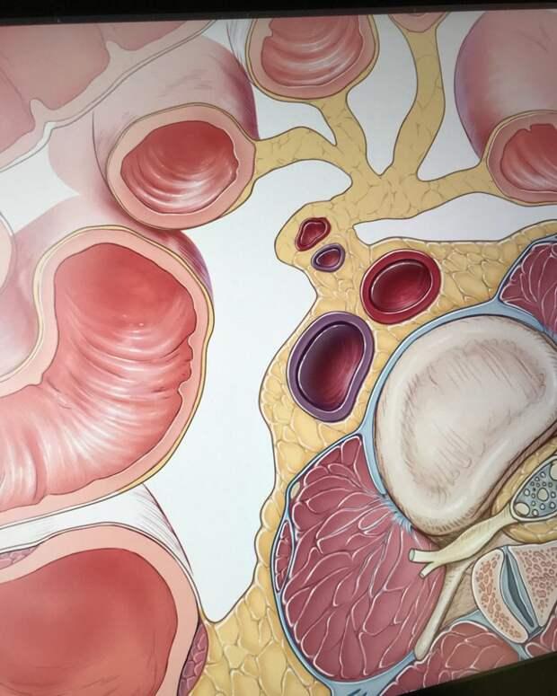 Как диета и факторы окружающей среды влияют на кишечную флору