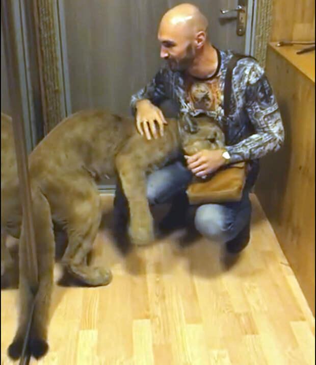 Настоящая львица! Вот как нужно встречать мужа с работы