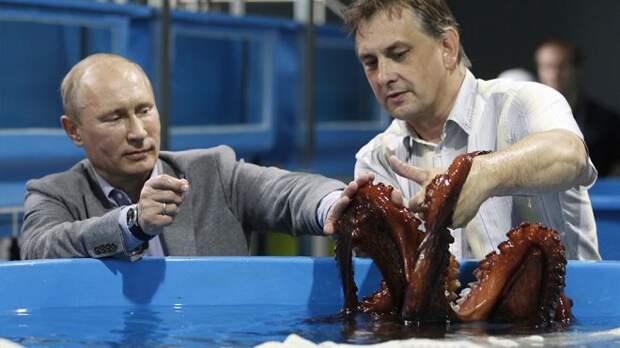 Путин и осьминог