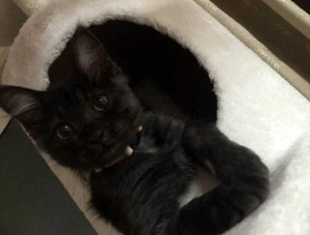 Супруги спасли еле живого котенка, подобрав его на обочине. Через год он вырос и изменил окрас