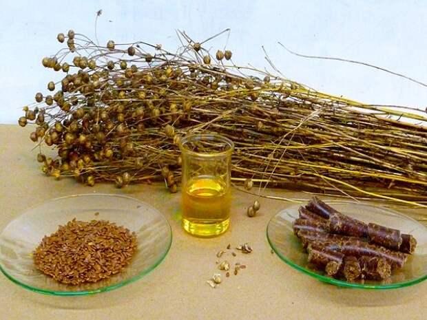 Льняное масло для ресниц: правила применения, результаты, польза и вред