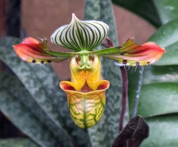 Longwood gardens orchid extravaganza интересное, красота, орхидеи, флора, цветы