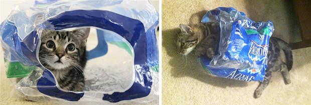30 фото кошек с любимыми игрушками детства «до» и «после»