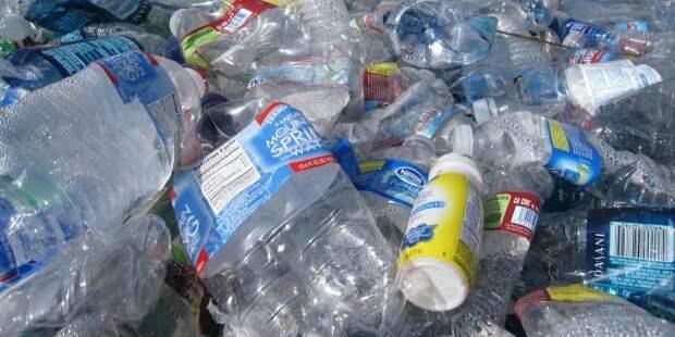 Пластик превращается... в протеиновый порошок!