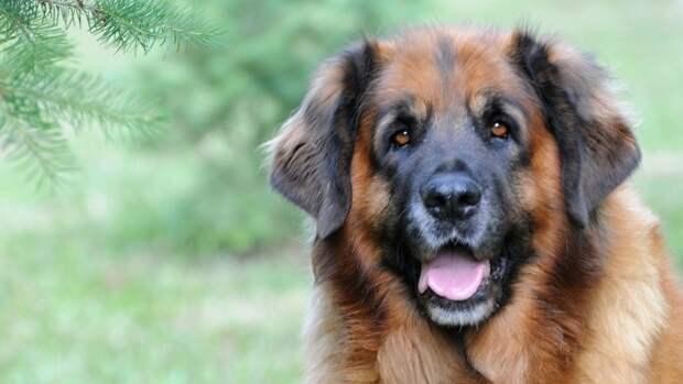Кинологи объяснили, как защитить собаку от клещей