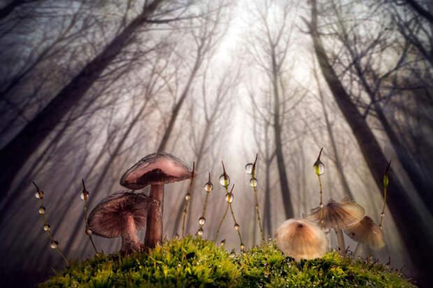 Лучшие фотографии природы фотоконкурса Siena International Photography Awards 2016 7