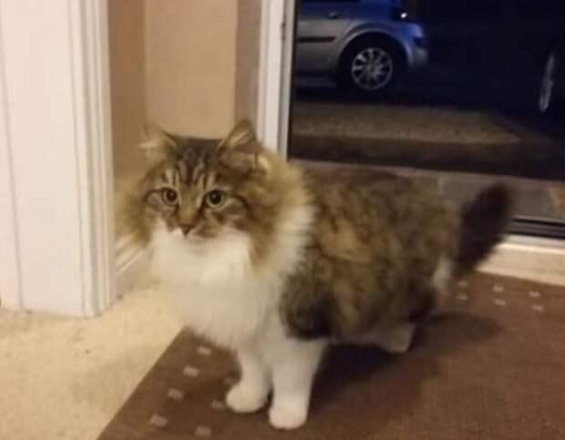 Кошка возле двери