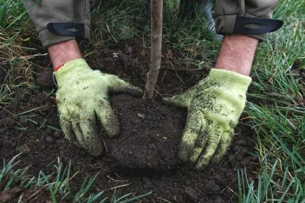 """Более 1,5 тысячи деревьев высадят в рамках акции """"Мой зеленый Иркутск"""""""