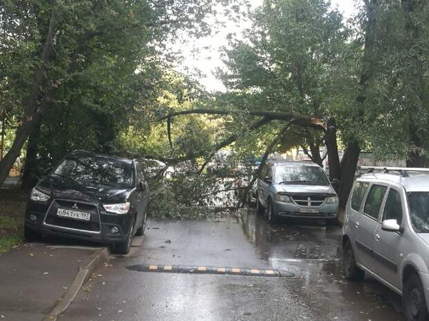 Во дворе на улице Вилиса Лациса дерево аккуратно упало между припаркованных автомобилей