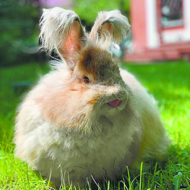 У дачников растёт интерес к выращиванию кроликов