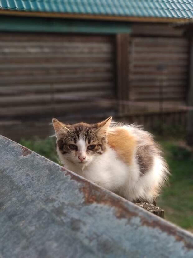 Твоё лицо, когда день не задался Хвостатые, братья наши меньшие, город, кот, кошка, улица, уличные кошки, эстетика