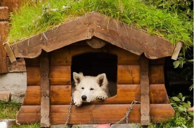Собачий вопрос– конура или догхаус? Строим стильную и удобную будку