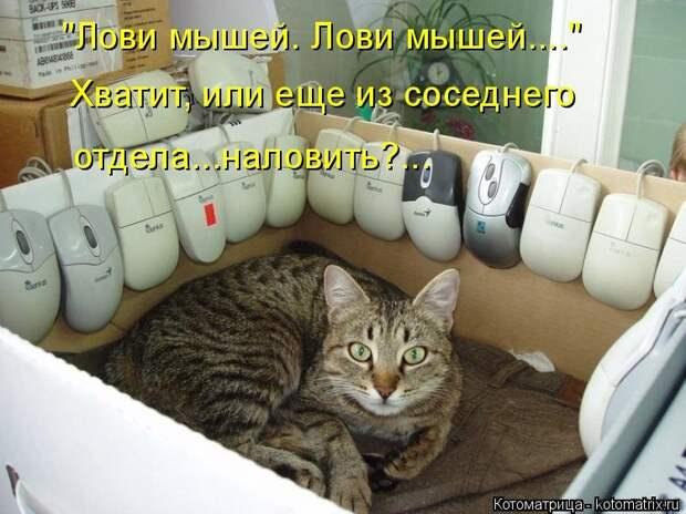 1474017310_kotomatricy-20
