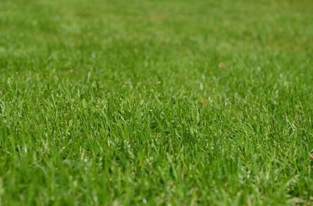 Испорченный газон на Бескудниковском бульваре привели в порядок