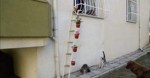 Эта женщина придумала прекрасный способ, как помочь уличным котам пережить холода
