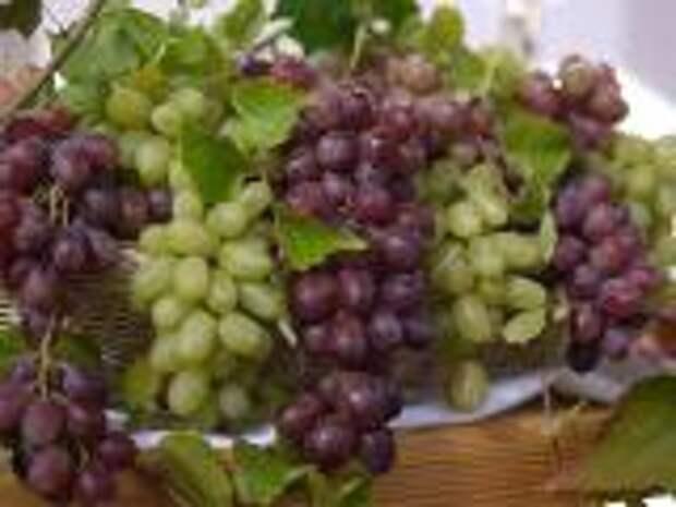 Ампелотерапия - лечение виноградом