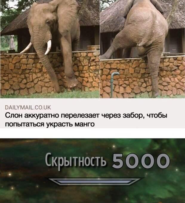 Слон перебрался через ограду