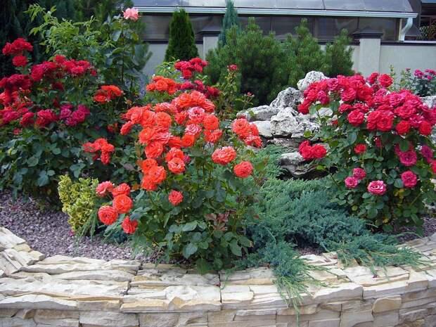 Болезни и вредители роз. Методы и средства для лечения и профилактики