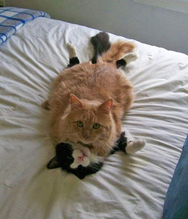 кошки которые умеют любить, кошачья любовь