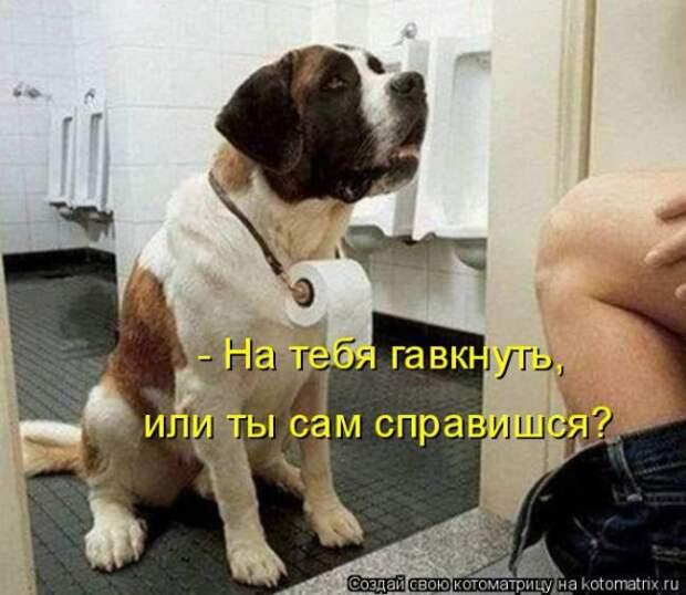 Котоматрица Мысли вслух :)