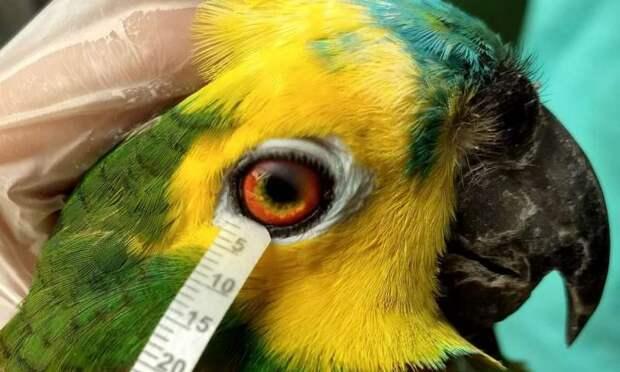 Ученые выяснили, что слезы птиц и рептилий похожи на человеческие