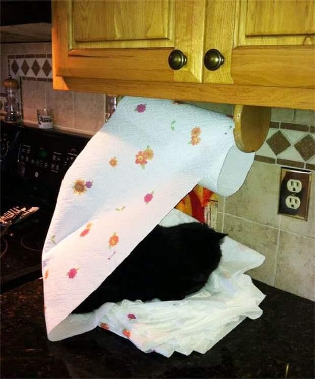 27 раз, когда домашние животные вели себя как болваны