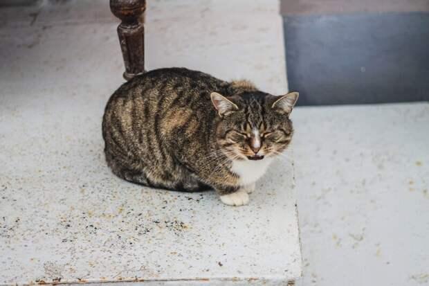 У подъезда Хвостатые, братья наши меньшие, город, кот, кошка, улица, уличные кошки, эстетика