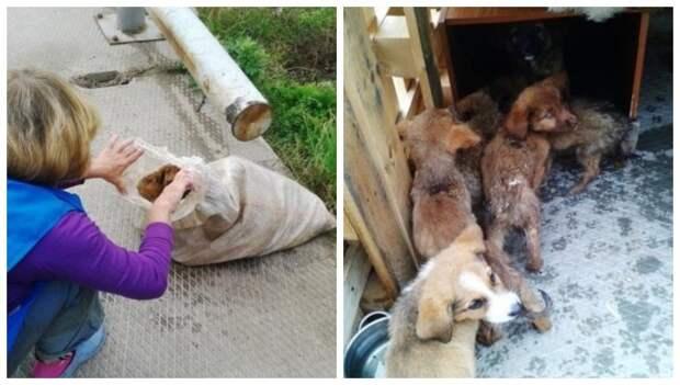Малыши бились за жизнь в завязанном пластиковом мешке история, мешок, приют, собака, щенки