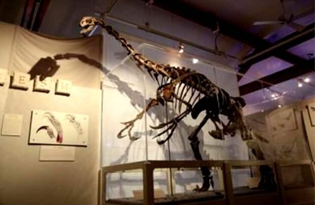 Рис. 6. Скелет теризинозавра (Therizinosaurus cheloniformis). Голова рептилии находилась на высоте 4-5 м