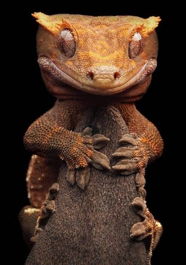 Гекконы интересное, рептилии, ящерицы