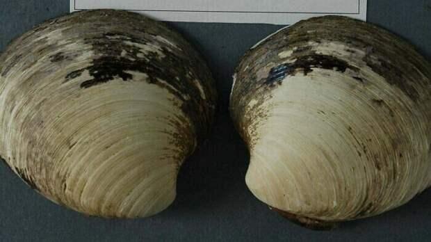 Это моллюск Мин, ему было 507 лет, и он считался самым старым животным на Земле. Исследователи убили его, пытаясь узнать его точный возраст
