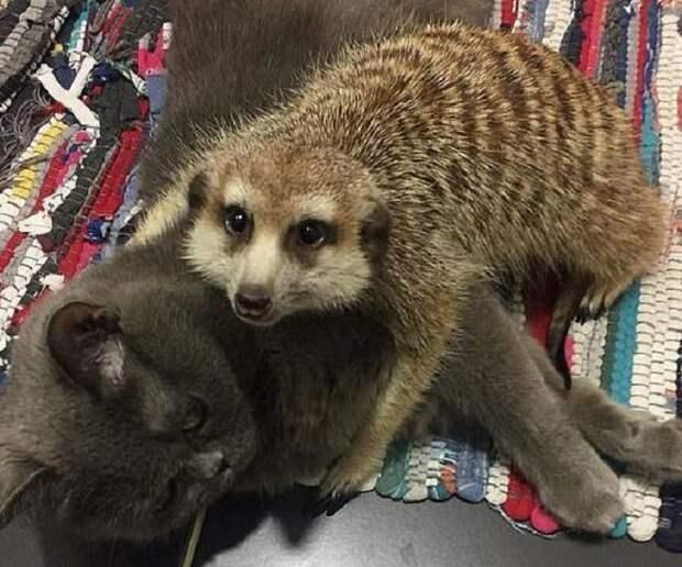Животные обнимаются
