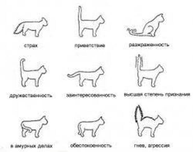 Как понять кошку, или кошачий язык?