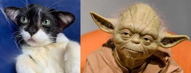 Кошка и Йода