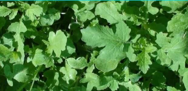 Здоровье вашего сада