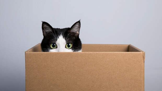 Ученые объяснили, почему кошки любят сидеть в коробках и пакетах
