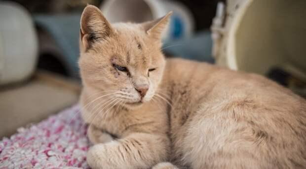 Женщина принесла кошку с улицы домой, а та оказалась с сюрпризом