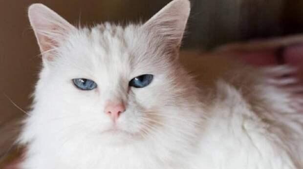 Приютская кошка шипела и боялась незнакомых людей: после пережитого она находилась в стрессе