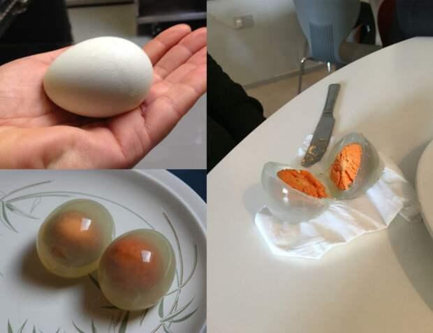 Вареные пингвиньи яйца подборка, прикол, теперь вы видели больше, удивительное, юмор