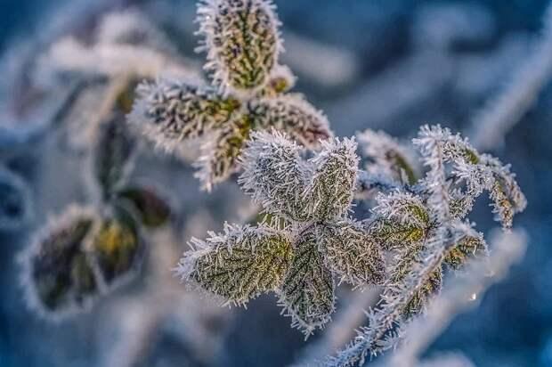 Снег и морозы вернутся на Кубань