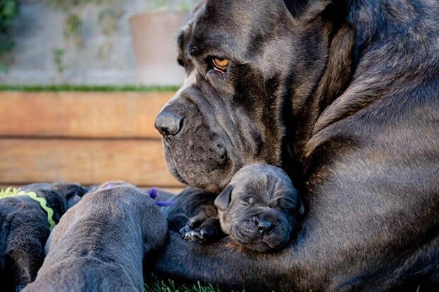 Эти собаки знают, что такое семья!