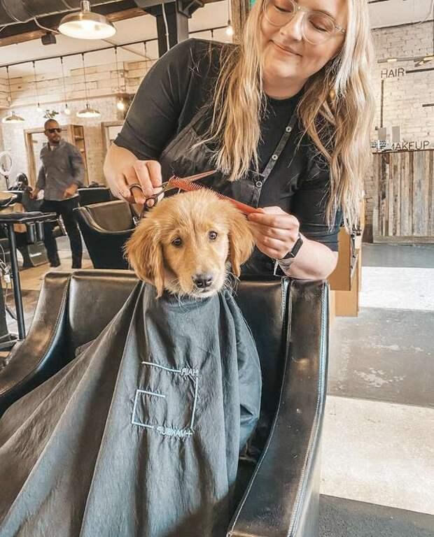 щенок в парикмахерской