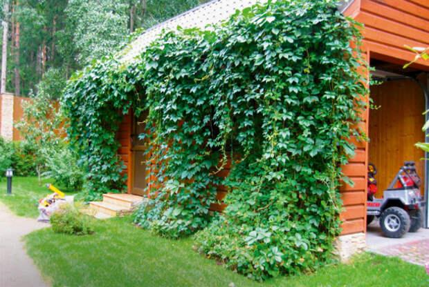 Вьющиеся растения как украшение фасада. | Фото: Правила Строительства.